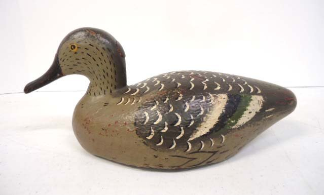 French Teal Hen