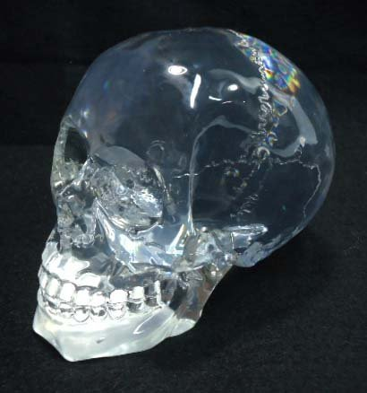 Lucite Skull Paperweight