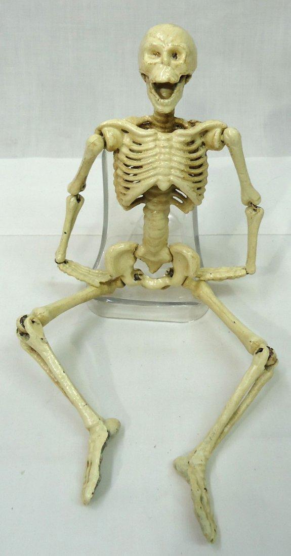 Modern C.I. Articulated Skeleton - 2