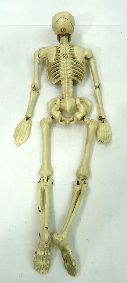 Modern C.I. Articulated Skeleton - 3