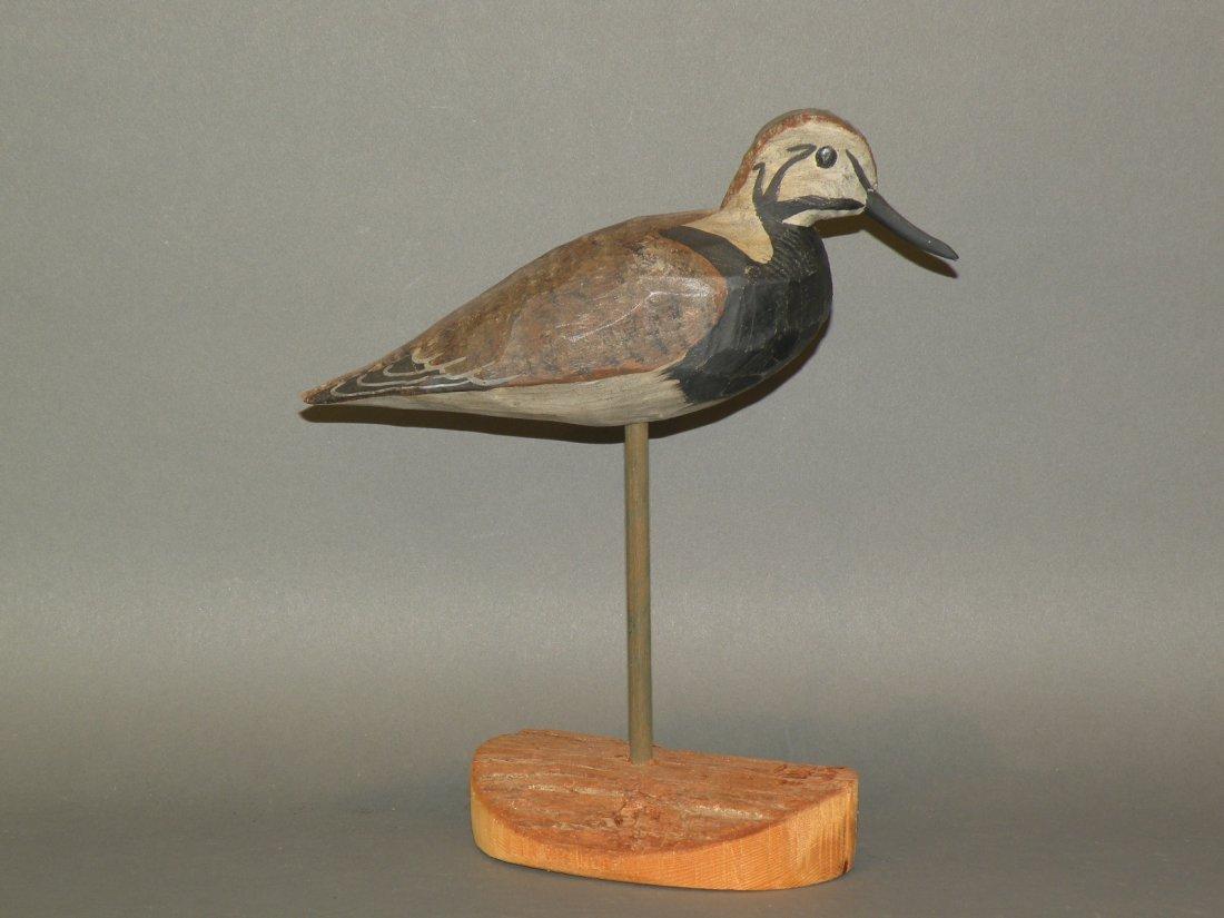 76: Shourds ruddy turnstone shorebird