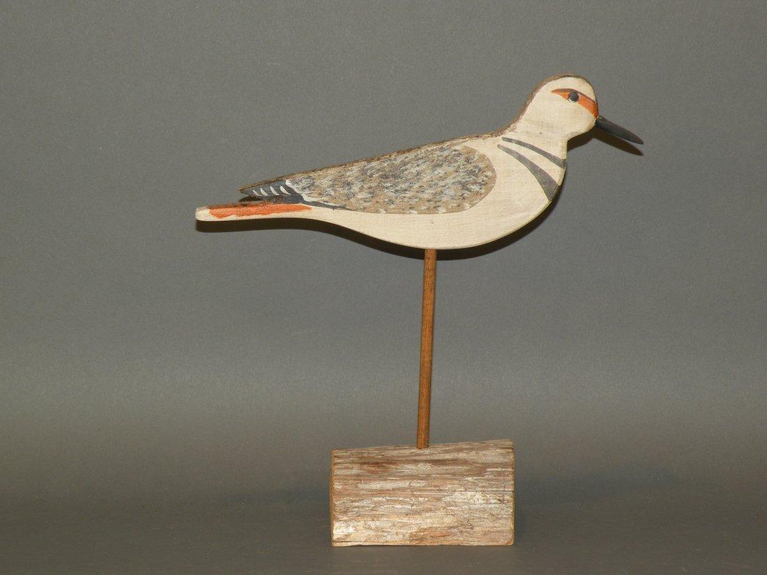 77: Shourds killdeer shorebird
