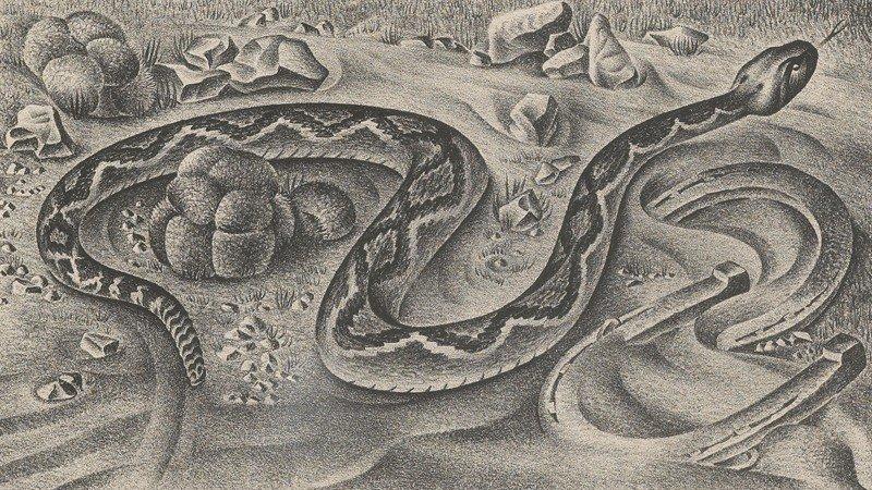 """1: Alexandre Hogue (1898-1994), """"Rattler"""" lithograph."""