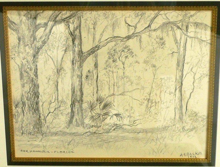 """9: A .E. Backus """"Oak Hammock Florida """""""