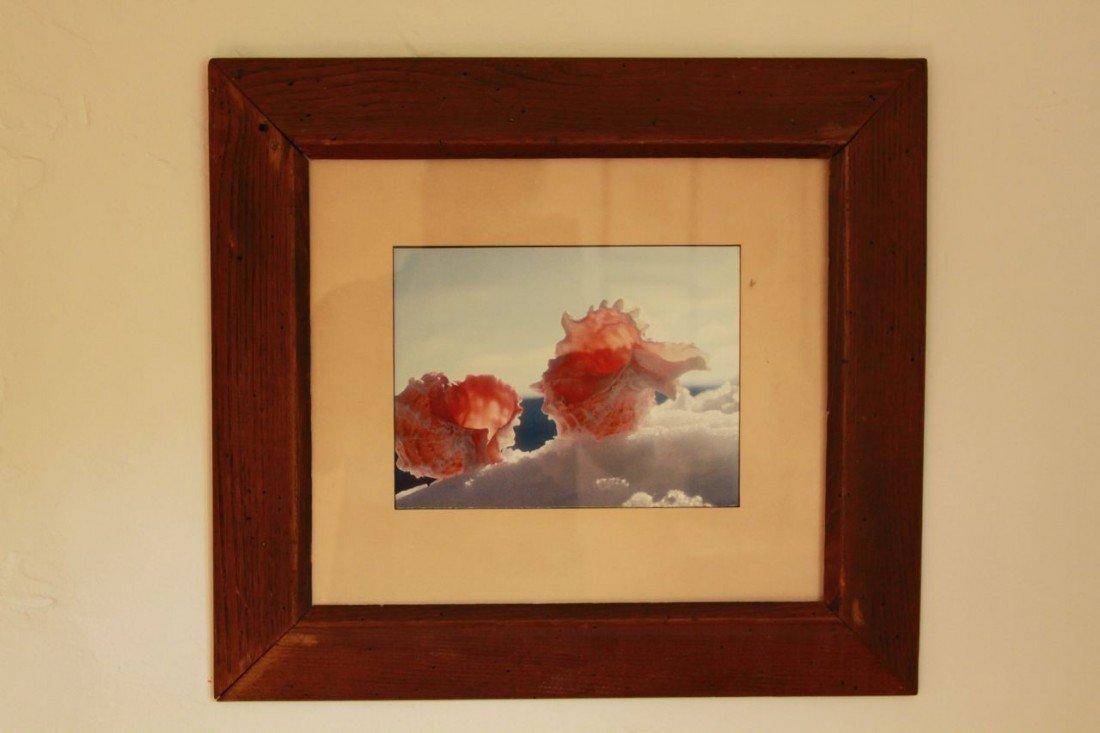 8: Seashell photograph by Mellon Tytell
