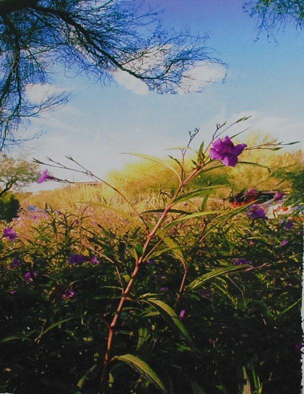 """151: """"Wildflower"""", Harvey Hellering"""