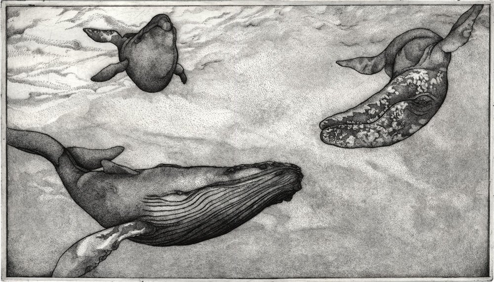 """152: """"The Great Whales"""", Patricia Wynne"""