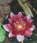 Water Lily Andrea Placer