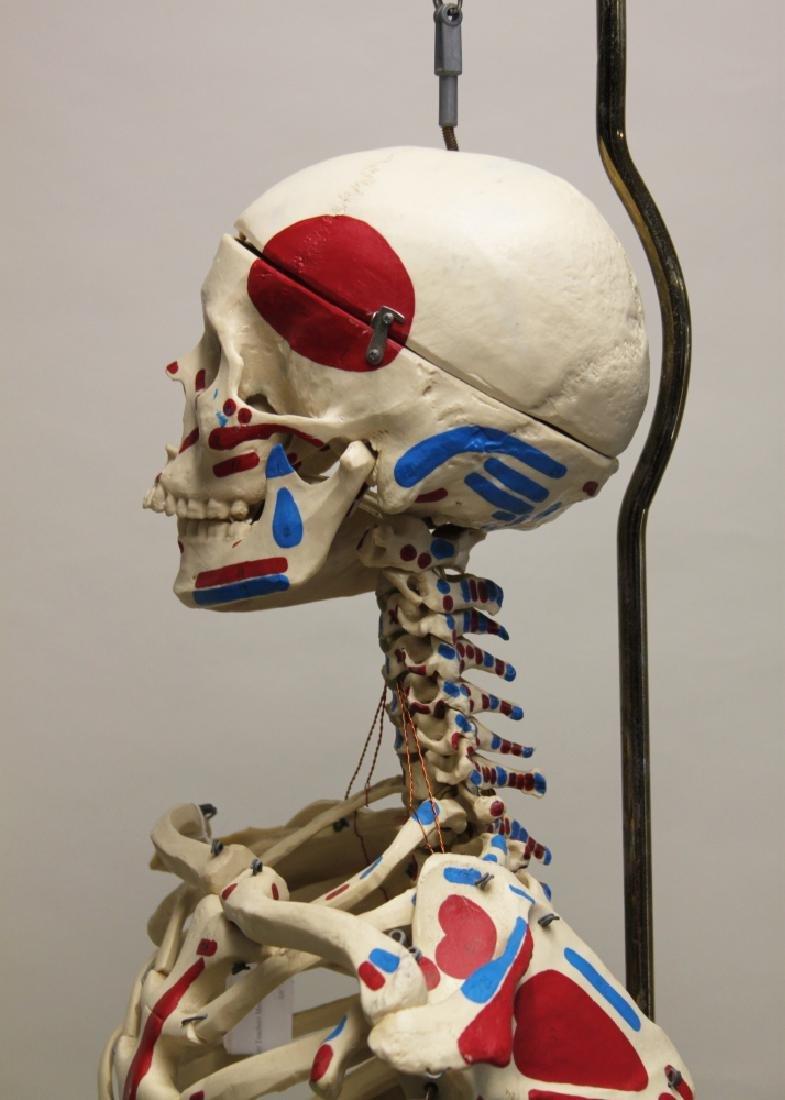 Vintage Human Skeleton Teachers Medical Model - 5
