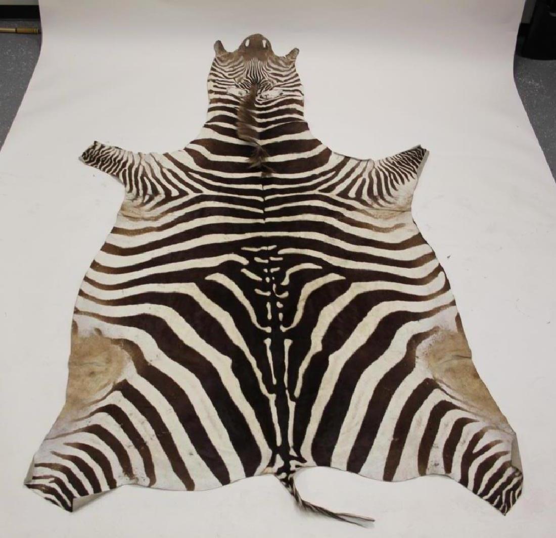 Vintage African Zebra Skin Taxidermy Rug