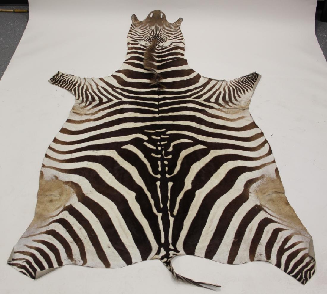 Vintage African Zebra Skin Taxidermy Rug - 2