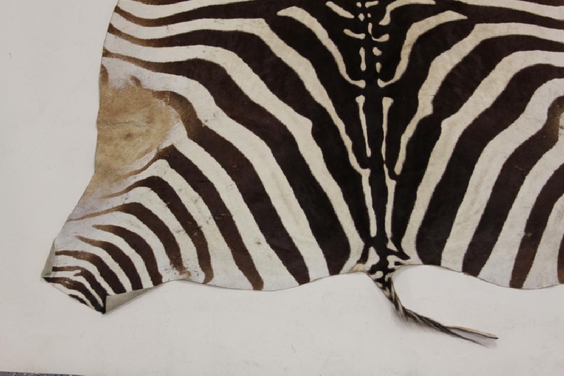 Vintage African Zebra Skin Taxidermy Rug - 3