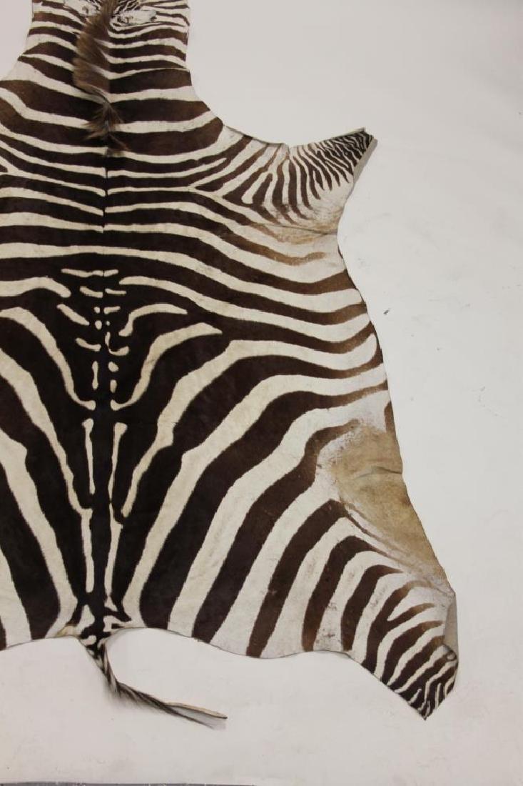 Vintage African Zebra Skin Taxidermy Rug - 4