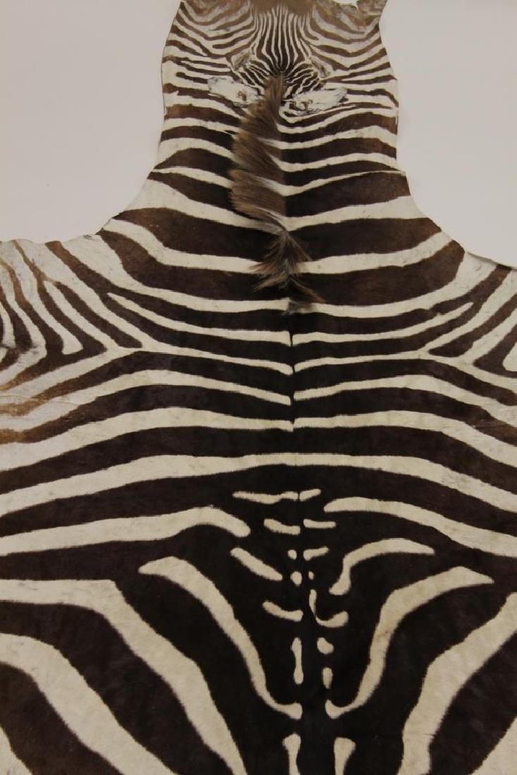 Vintage African Zebra Skin Taxidermy Rug - 5