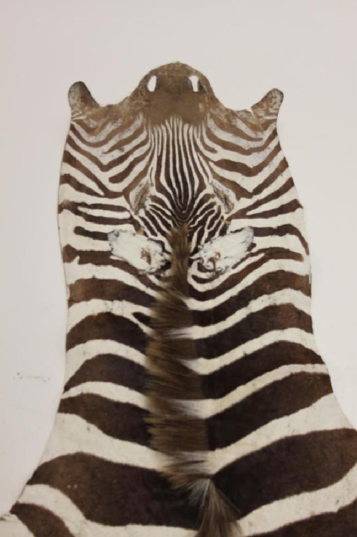 Vintage African Zebra Skin Taxidermy Rug - 6
