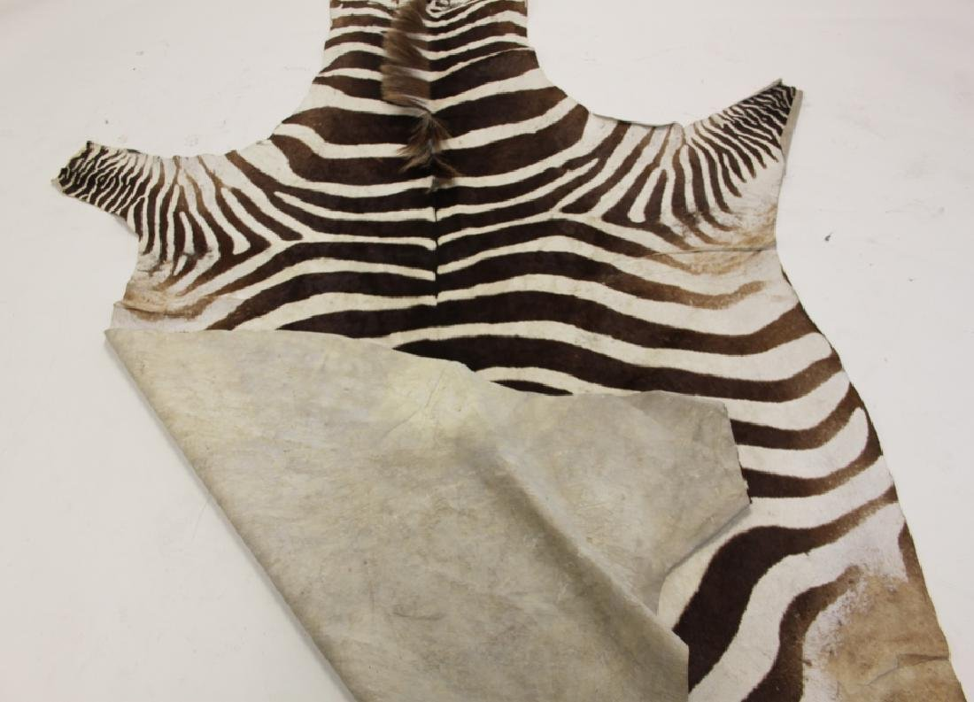 Vintage African Zebra Skin Taxidermy Rug - 7