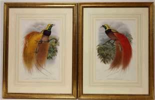 (2)19c W Hart Bird of Paradise Hand Colored Lithos