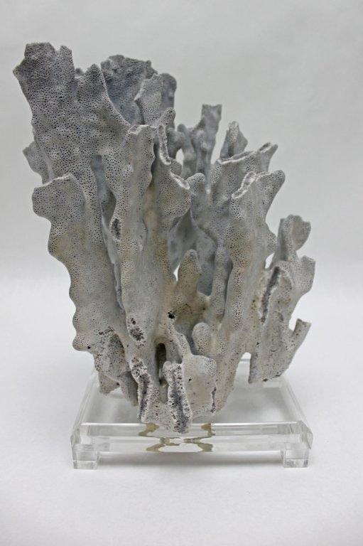 20: Blue Coral Sculpture on a Lucite Base