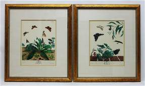 201 218thC Moses Harris Botanical Engravings