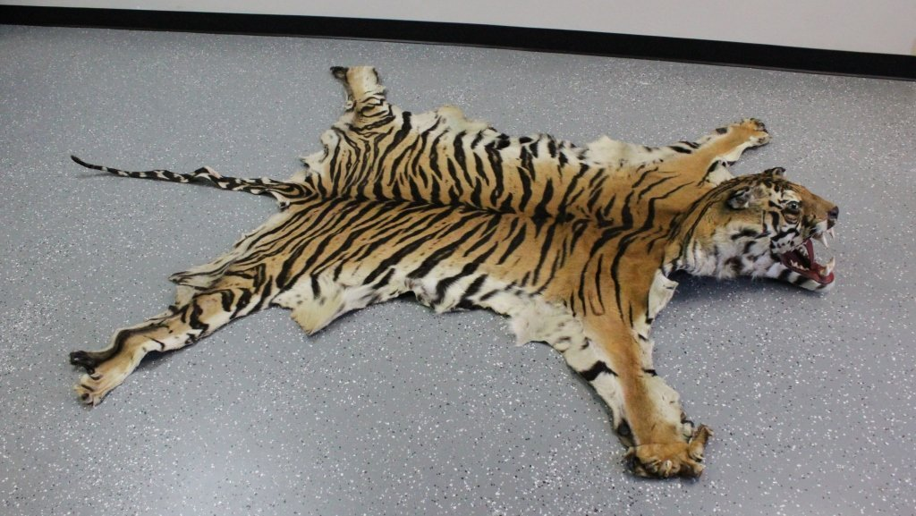 Bengal Tiger Rug - Rugs Ideas
