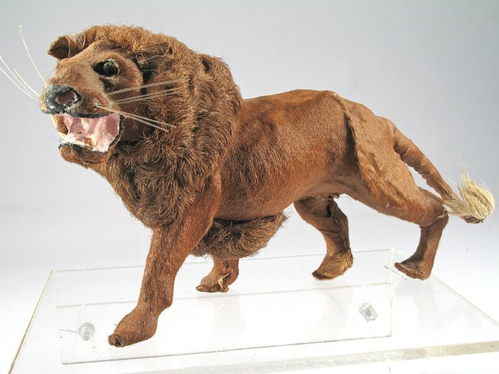 German Mohair Lion 1890\'s Exquisite