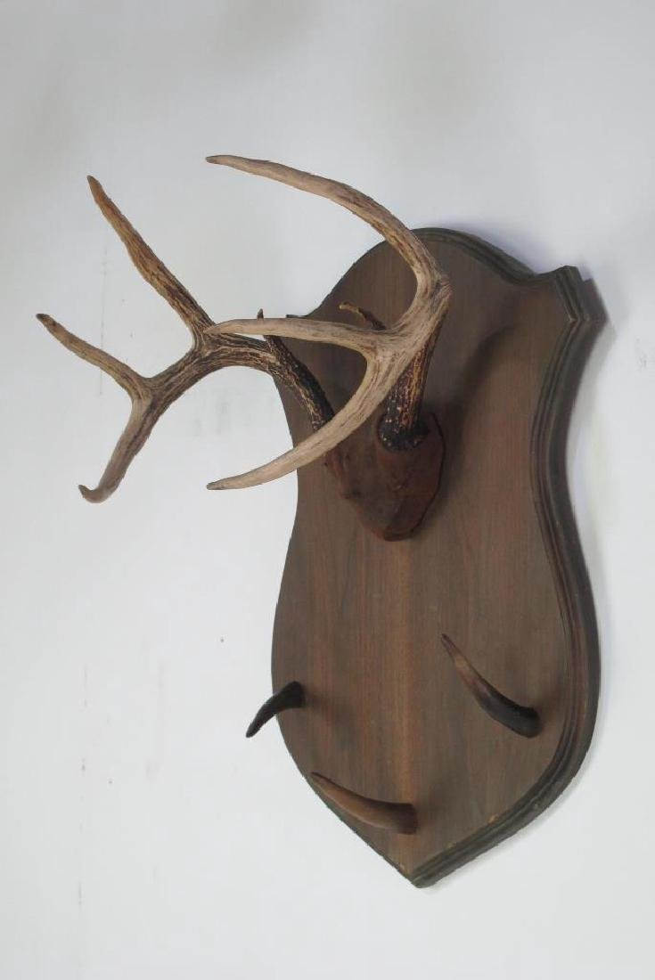 Mounted Antlers - 2
