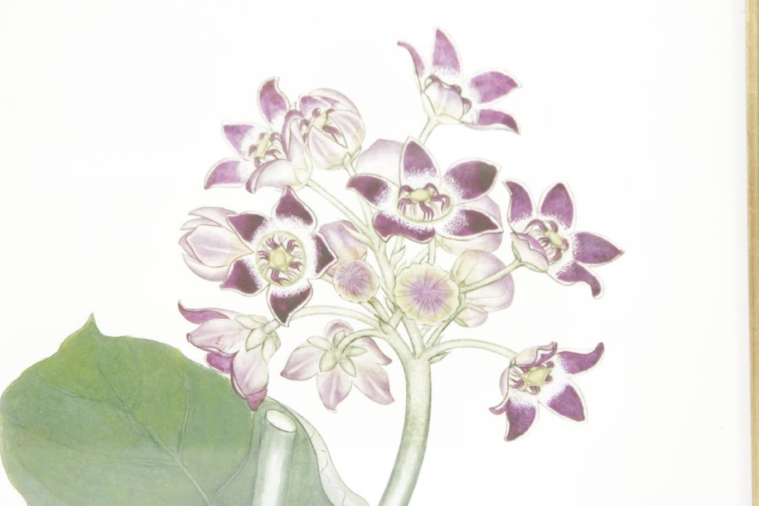 Pair  Decorator Botanicals in Mirrored Frames - 2