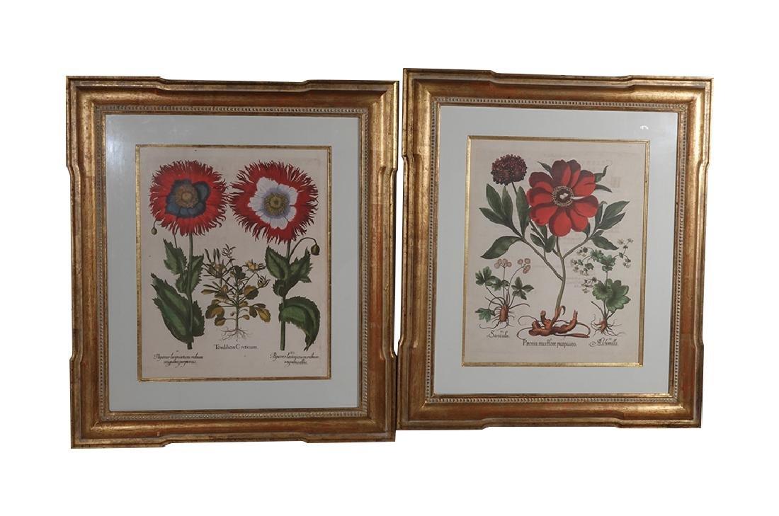 Pair of BESLER Botanical Prints