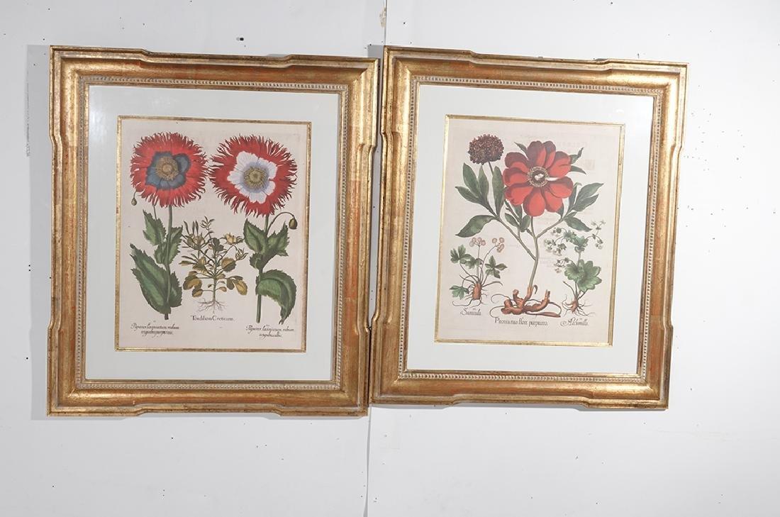 Pair of BESLER Botanical Prints - 3
