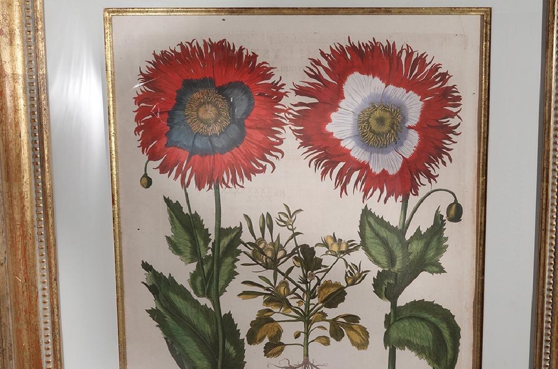 Pair of BESLER Botanical Prints - 4