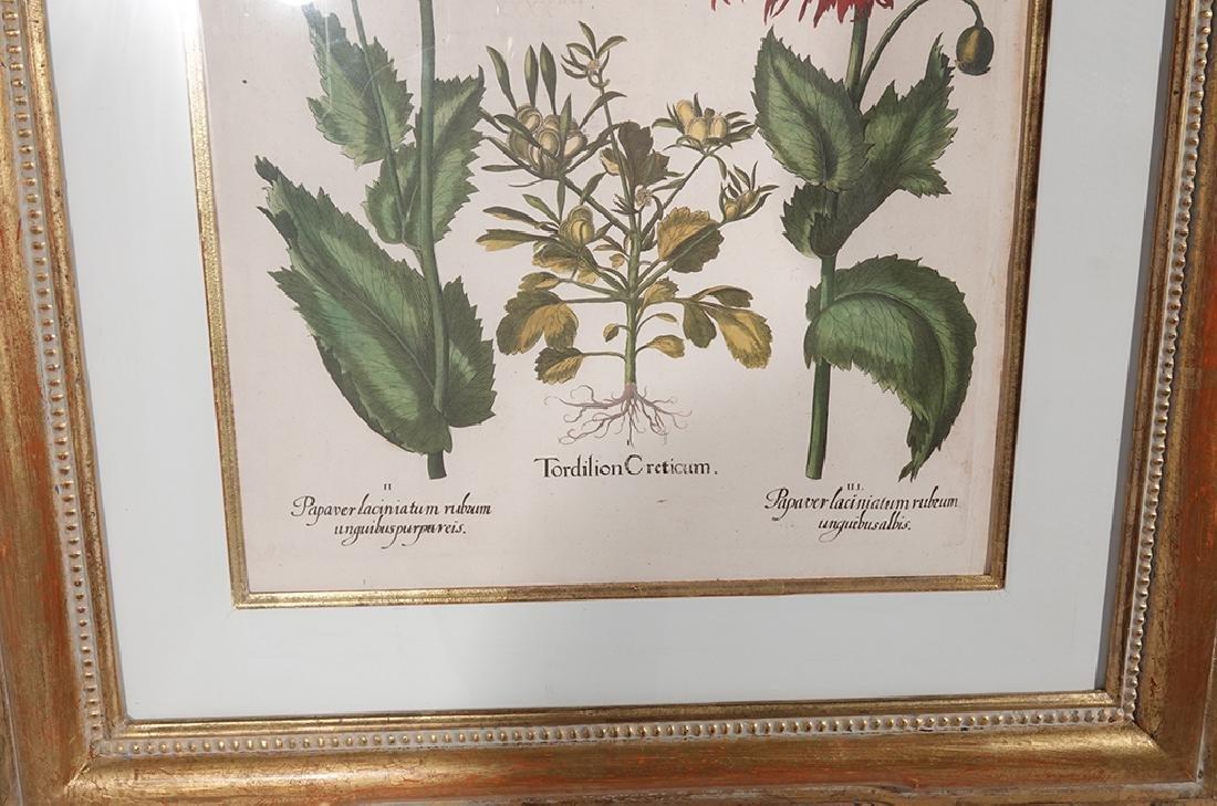 Pair of BESLER Botanical Prints - 5