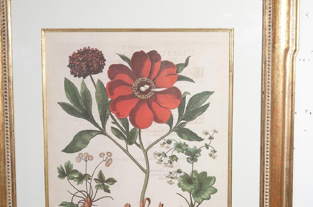 Pair of BESLER Botanical Prints - 6