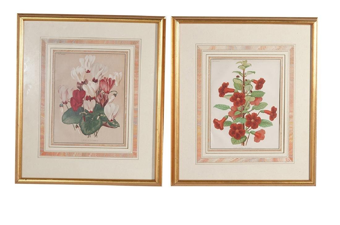Pair Framed Botanicals