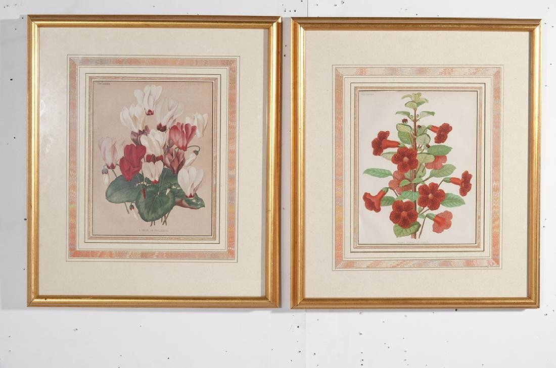 Pair Framed Botanicals - 2