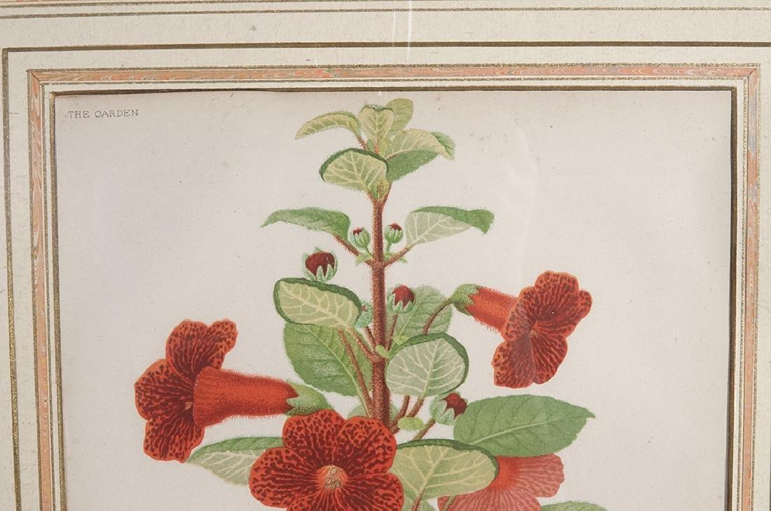 Pair Framed Botanicals - 3