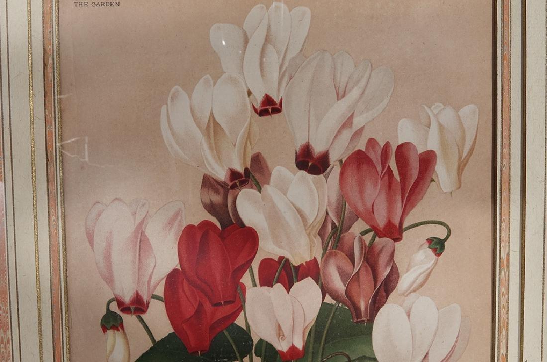 Pair Framed Botanicals - 4