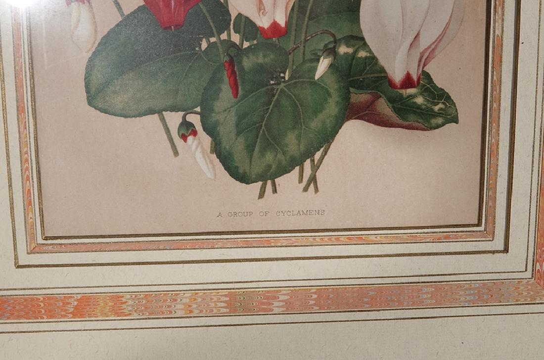 Pair Framed Botanicals - 5