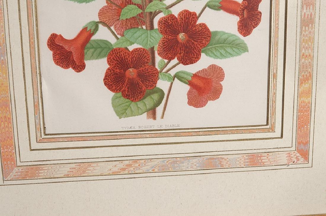 Pair Framed Botanicals - 6