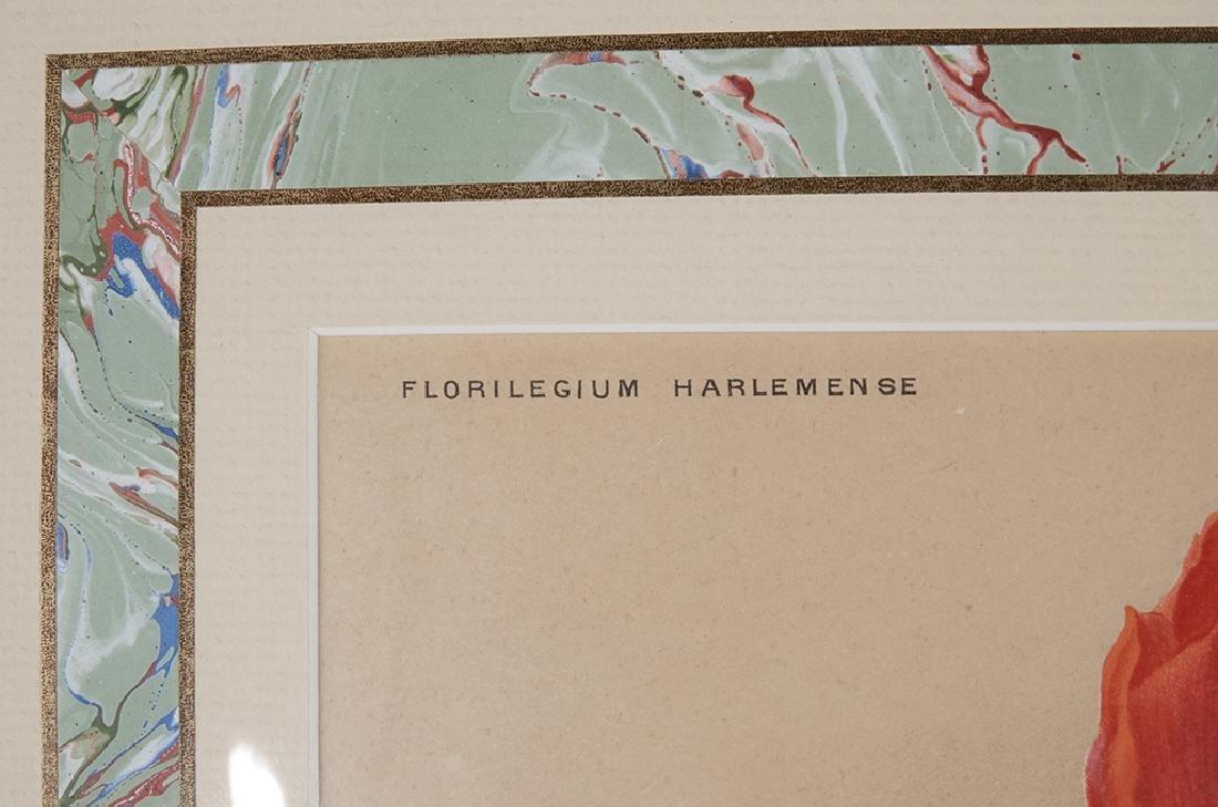 Pair of Botanical Prints - 10