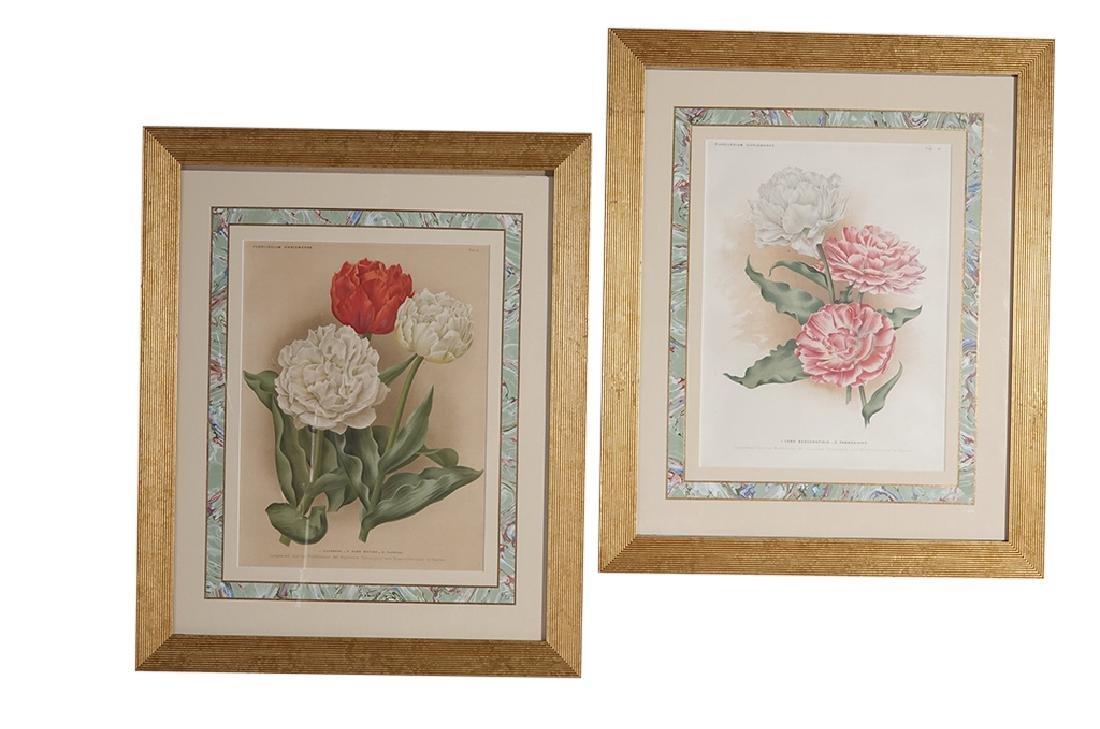 Pair of Botanical Prints