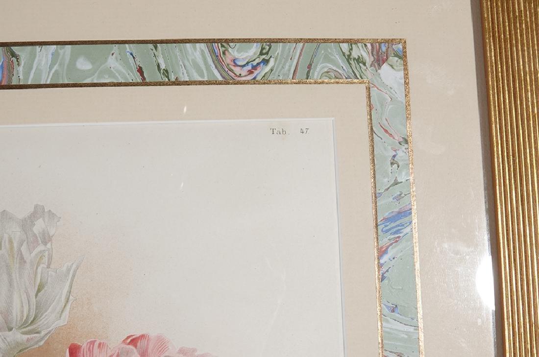 Pair of Botanical Prints - 2