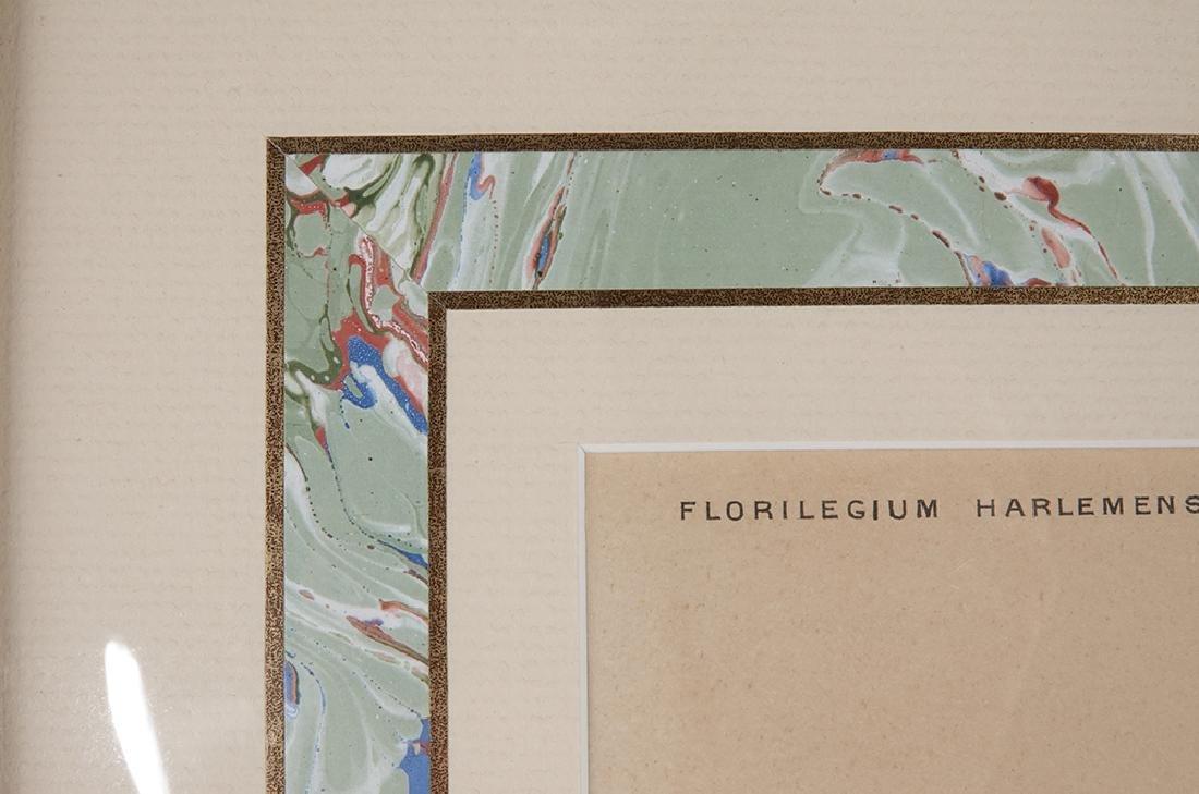 Pair of Botanical Prints - 3