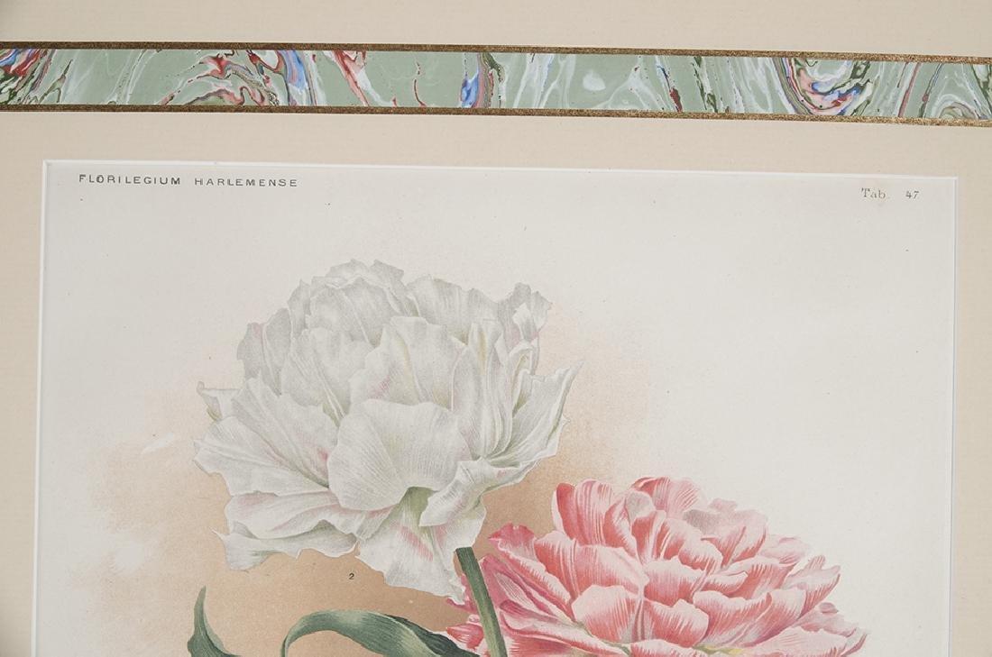 Pair of Botanical Prints - 6