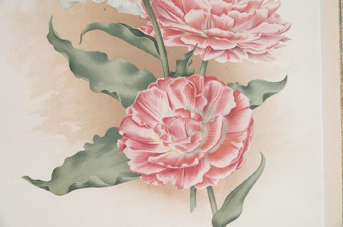 Pair of Botanical Prints - 7