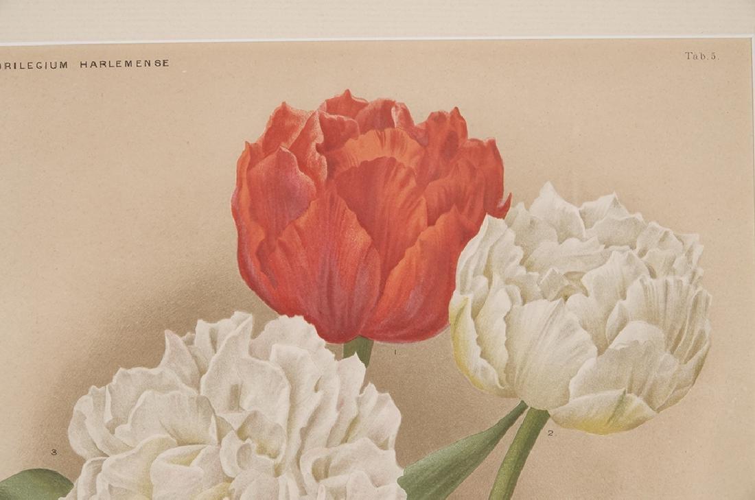 Pair of Botanical Prints - 8