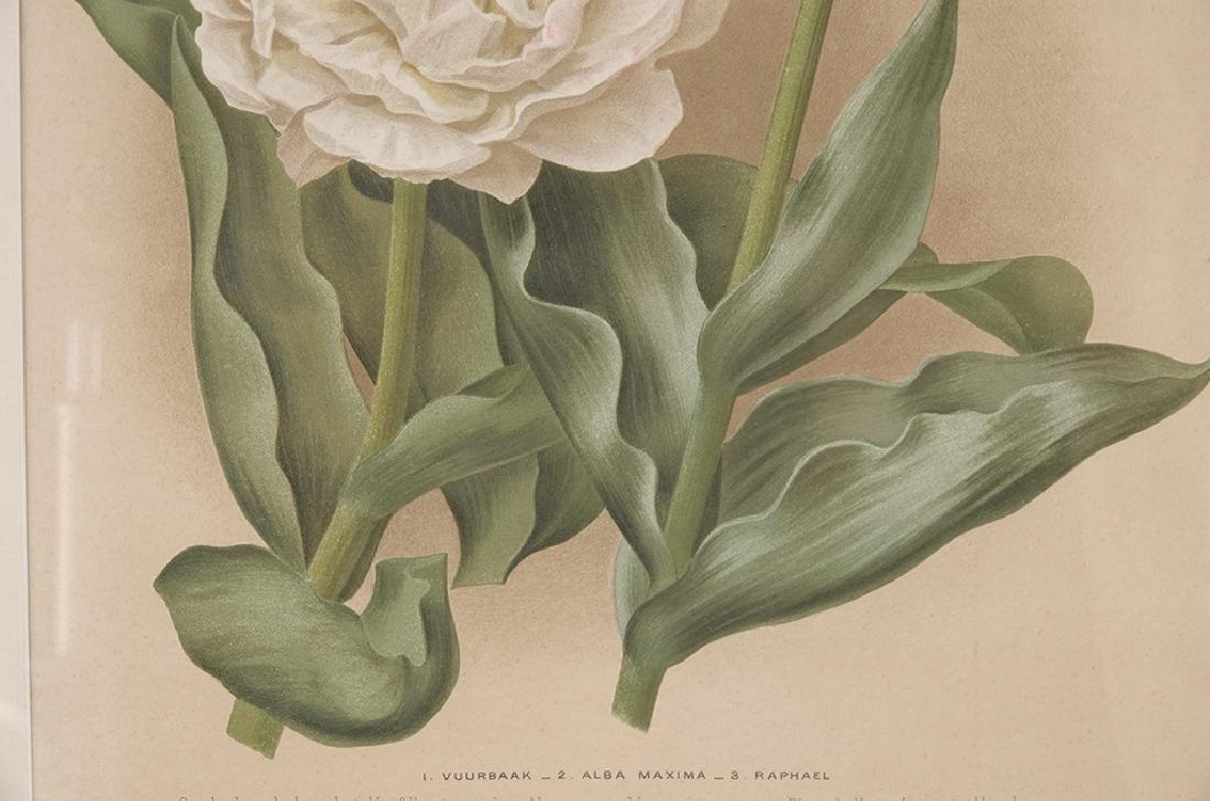 Pair of Botanical Prints - 9