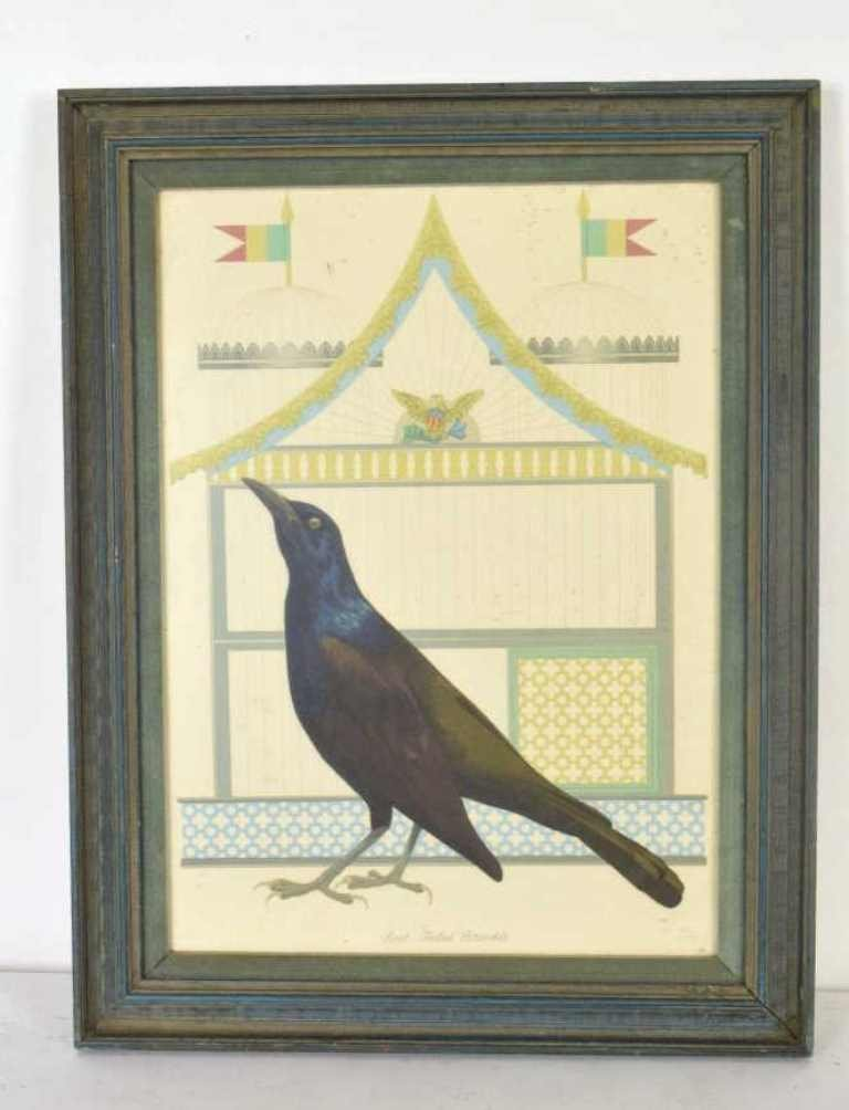 Boat Tail Grackle Print