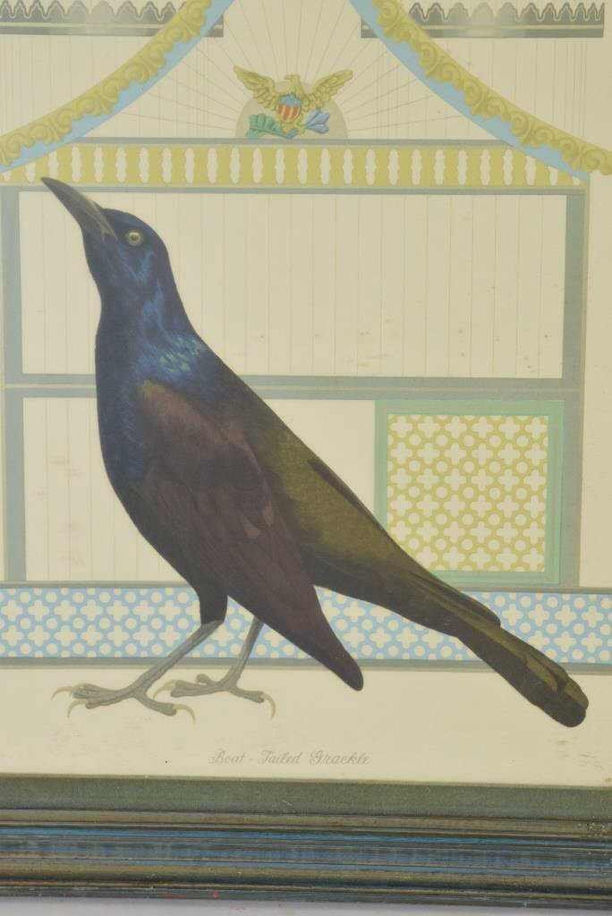 Boat Tail Grackle Print - 2