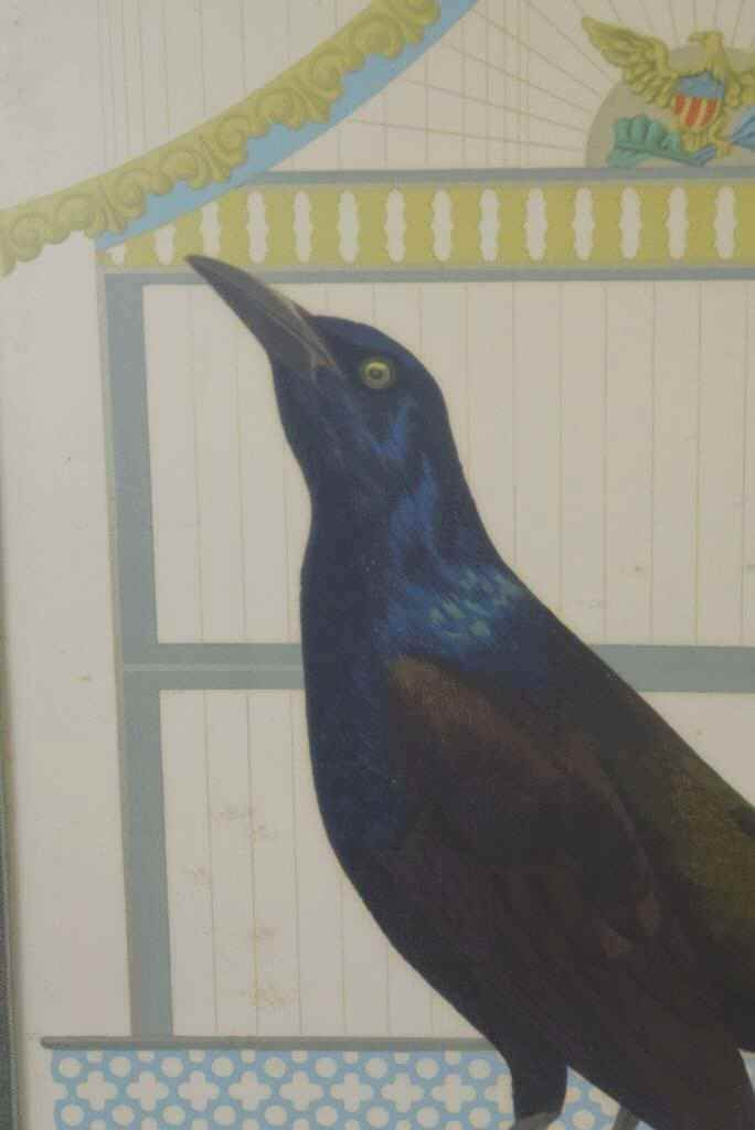 Boat Tail Grackle Print - 4