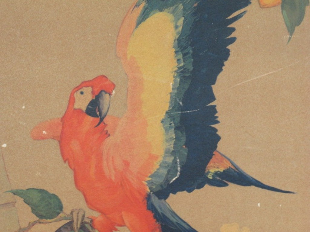 Stark Davis Parrot Print - 2